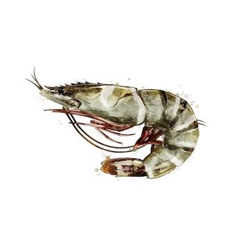 タイガーエビ、甲殻類の水彩の隔離された図。
