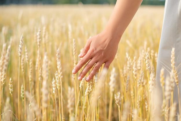 小麦の穂に触れる女性の手