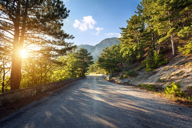 日没時の夏の森のアスファルト道路。クリミア山脈