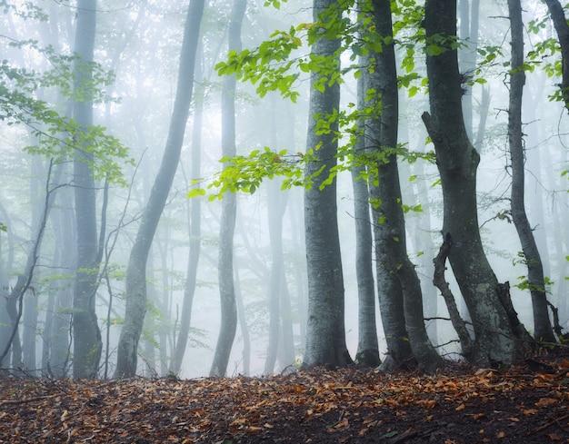 霧の中で神秘的な暗い古い森。クリミアの秋の朝