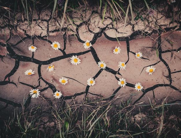Фон с коричневой сухой трещины земли, цветы и зеленая трава