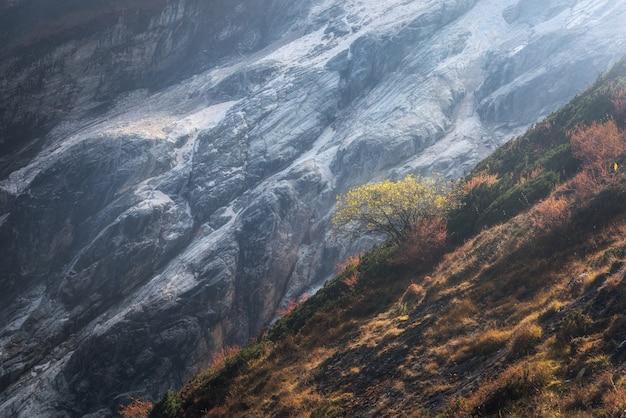 丘の中腹にある美しい一人の木の美しい景色