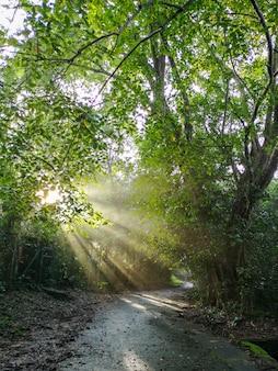 木を通して輝く太陽の光