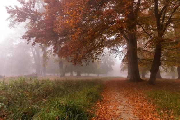 霧の中の小さな道。霧の深い朝の紅葉、デンマークの森の美しい木々