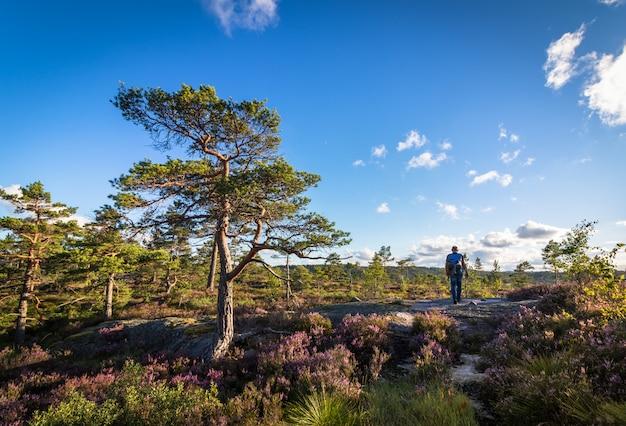 荒野、ノルウェーの森林景観、青い空と雲の中を歩く男