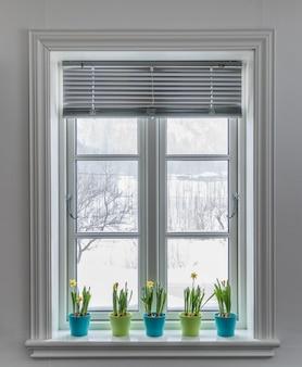 水仙のドワーフ水仙のカラフルな植木鉢で飾られたブラインド付きの窓。外は雪で春。