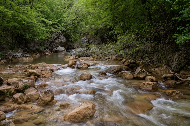 Горная река течет через зеленый лес