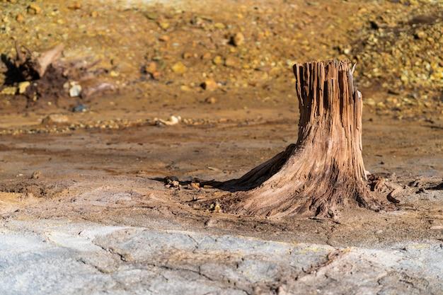 汚染、干ばつ、および火災の結果としての森林の損失。乾燥した木の幹の異常な形、枯れ木のテクスチャ
