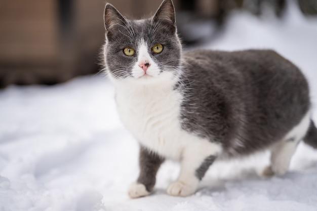 Милый котенок гуляет по снегу зимой