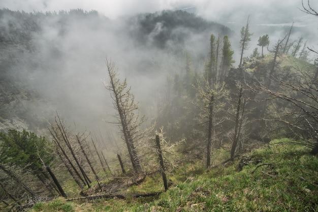 日の出前に霧が丘に登っています