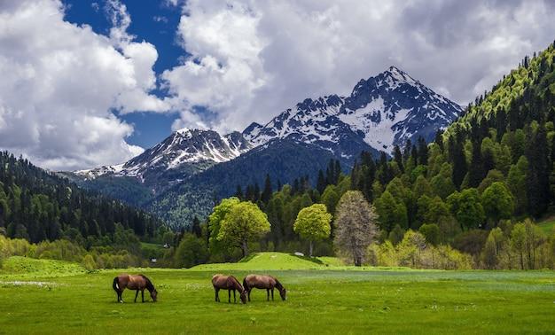 アブハジアの牧草地に沿って、馬の群れが歩いています。高山、氷河、緑の美しい景色。