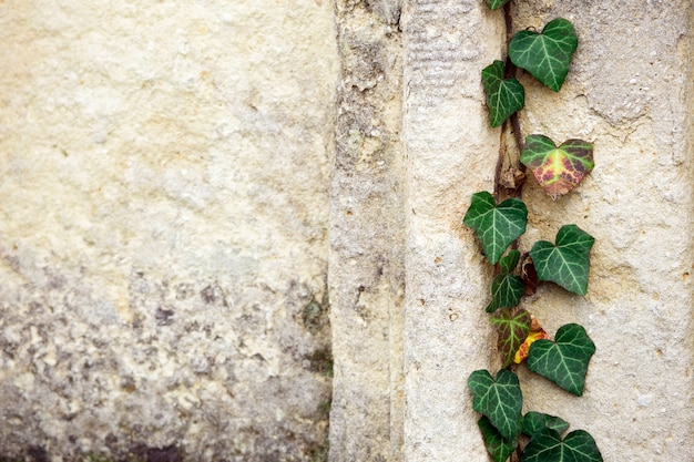 宗教的なシンボルを持つ古いユダヤ人墓地。