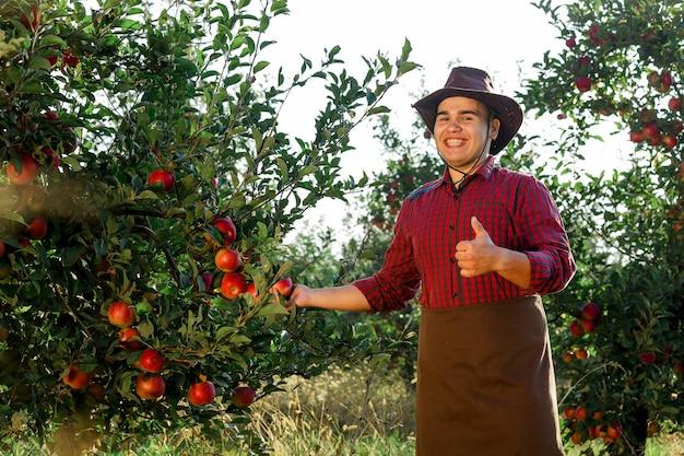 Молодой счастливый человек в саду собирать спелые яблоки