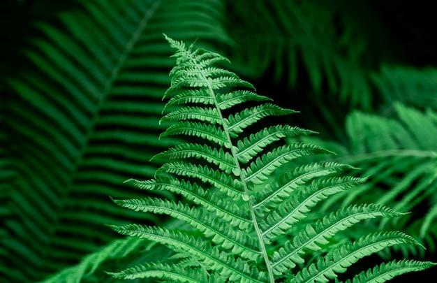 Тропические зеленые листья папоротника
