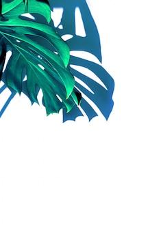 青白インディゴトロピカルテクスチャ緑の葉自然美術、モンステラ