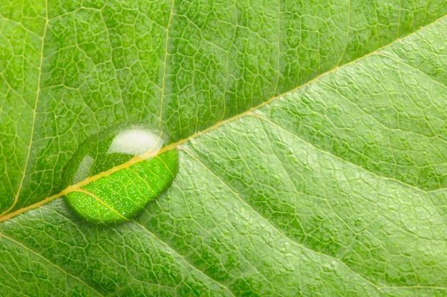 葉の水滴のマクロ写真
