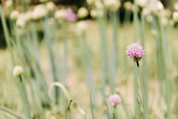 ねぎと花の美しい生花