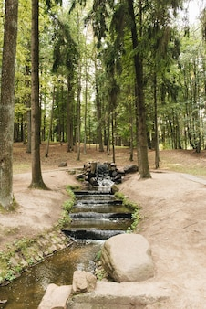 川、夏の川、公園ドロッディミンスク、ベラルーシを歩く歩行者