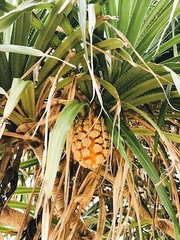 大きな果実、タイの熱帯植物