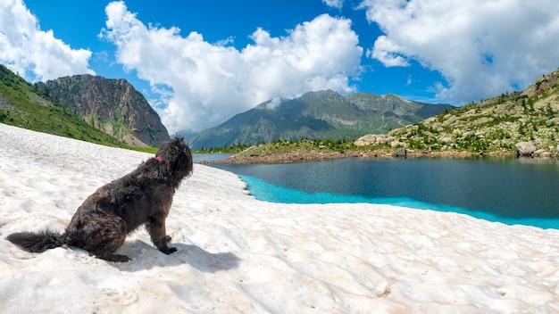 山の湖の近くの雪の上の羊飼いの犬