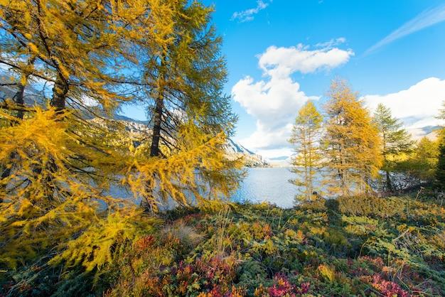Осенние краски возле альпийского озера