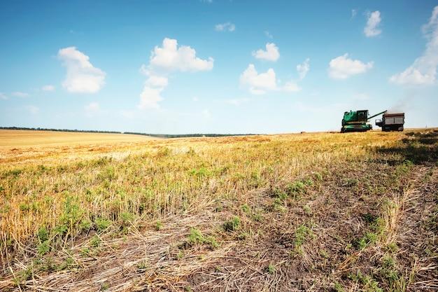 Зерноуборочный комбайн на поле с пшеницей