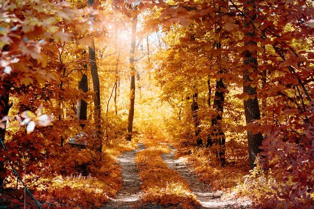 秋の森の田舎道