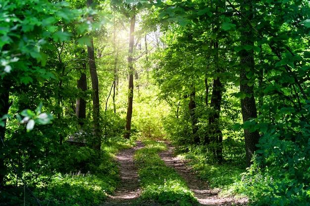 夏の森の田舎道