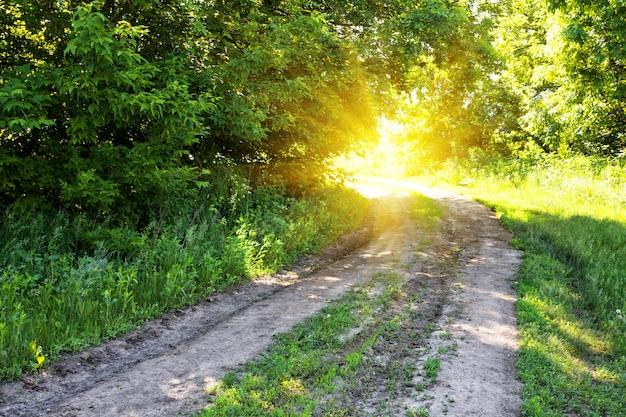森の中の太陽への田舎道