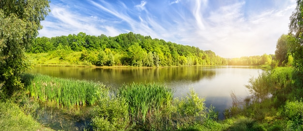 明るい太陽の下で海岸に緑の木々と湖