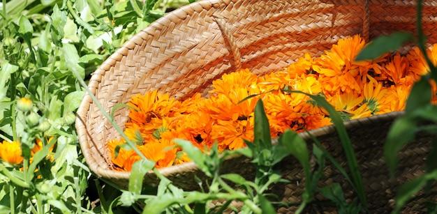 カレンデュラの花が付いているバスケット