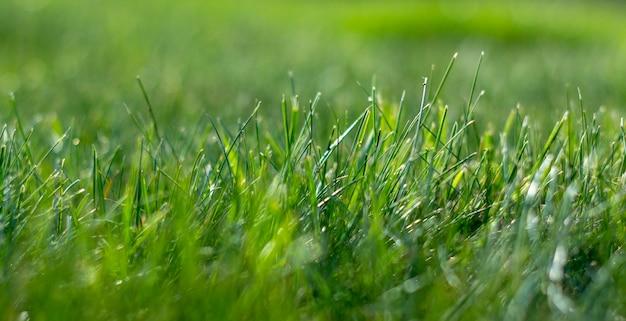 ジューシーな若い草が茂った草の背景