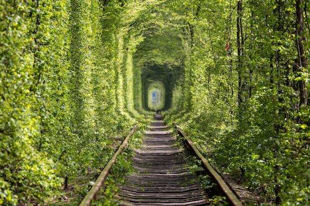 自然の驚異。愛のトンネル。ウクライナ。