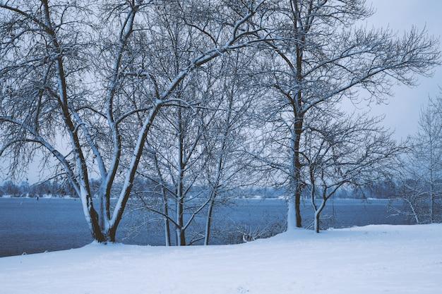 雪の中で冬の公園