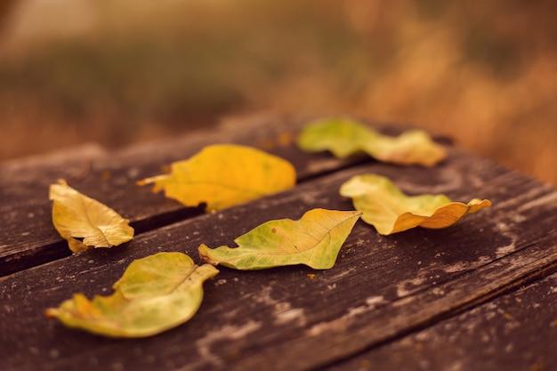 Осенние листья на скамейке