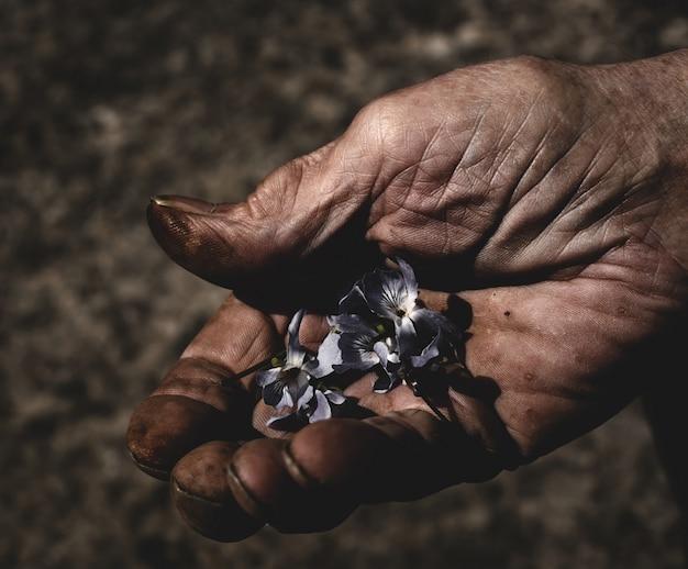 Рука человека держит маленькие цветы