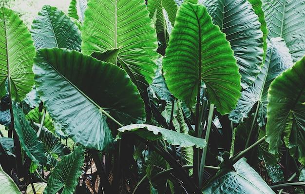 Тропический лист, большая листва, абстрактные зеленые текстуры, природа фон