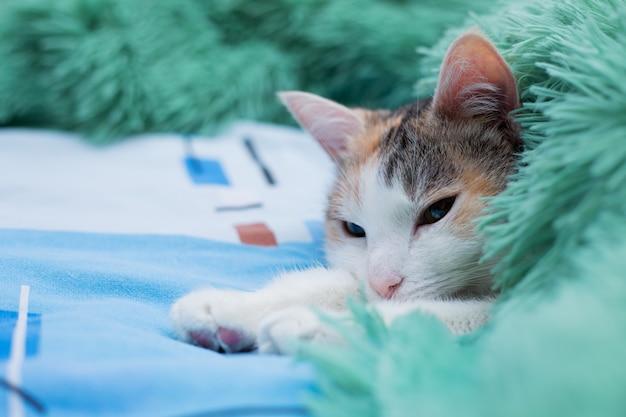 Кот лежит под одеялом в постели хозяина.