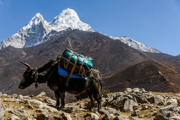 Як в непале