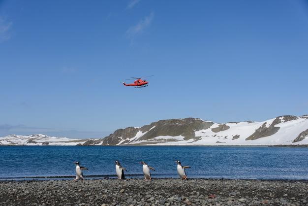 ビーチでのジェンツーペンギンのグループ