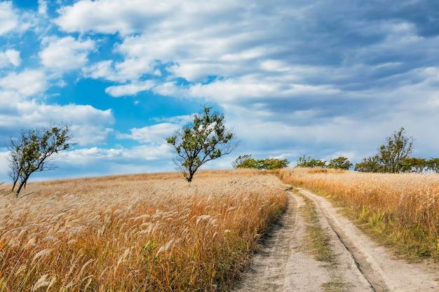 Сельские пейзажи с сухой травой и зелеными деревьями в осенний сезон