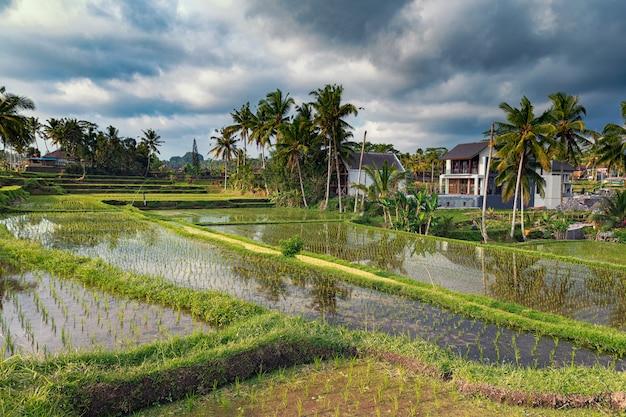 Рисовые поля и террасы прекрасный вид в убуде, бали