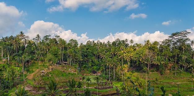 Панорамный вид на рисовые террасы и пасмурное голубое небо в убуде, бали