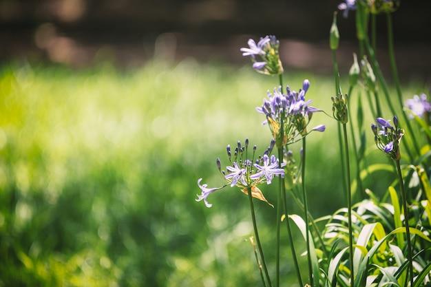 紫の花と葉の背景画像