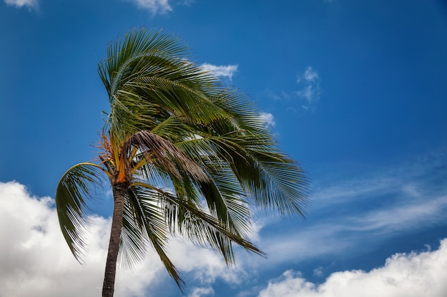 風と曇りの青い空に吹くヤシの木