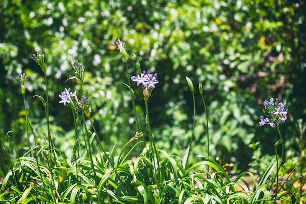 Фиолетовые цветы и листва фоновое изображение