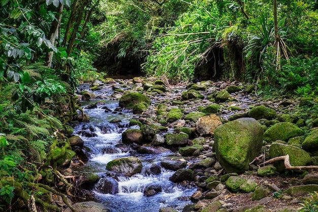ハワイ、オアフ島の熱帯雨林の小川カスケード