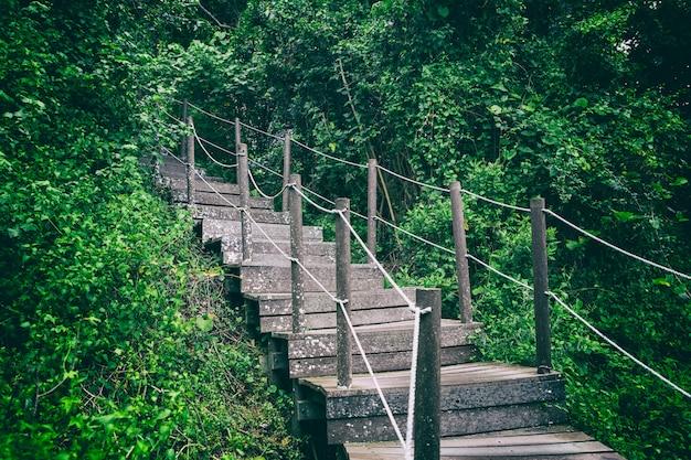 夏の森の中の木製の階段パス