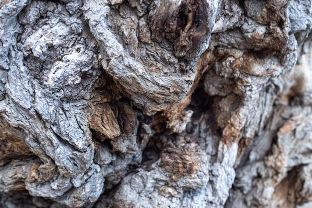 抽象的なテクスチャの木の樹皮