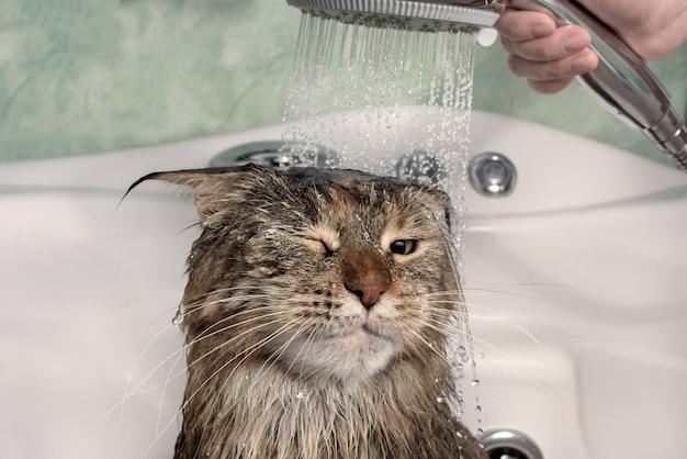 お風呂でぬれた猫